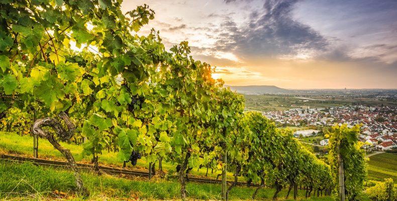 Blick auf Weinstadt - © Bernd Schmidt/Shutterstock.com